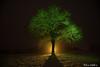 GrEeN tReE (Meli's Eye) Tags: lightpaint lightpainting light green orange vert naranja verde night nuit noche lumiere lumières luz belgium long exposure longue pose peinture