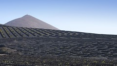 La Geria III (picturesfrommars) Tags: la geria kanaren lanzarote a6300 ilce6300 sel1670z nature vino weinberg vulcano