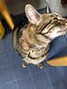 Affectionate Tigger (sjrankin) Tags: 17january2018 edited animal cat floor kitchen yubari hokkaido japan tigger affectionate stretch