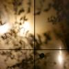 構成=Composition-137/Vibrations fixed by cross (kouichi_zen) Tags: shadows night leaves light geometry cross nature