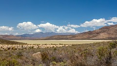 4Y4A1199 (francois f swanepoel) Tags: brandvleidam drought rawsonville scenics water westerncape worcester