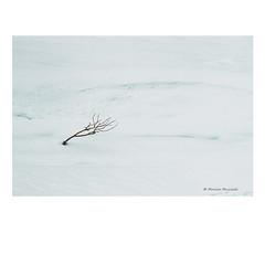 (Monica Muzzioli) Tags: snow mountains tracks footprints bare shrub twig winter minimalism
