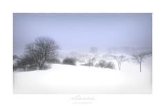 silence1 (PATRICE OUELLET) Tags: patricephotographiste silence winter hiver landscape paysage mystère plainedabraham quebec mysteries