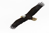 American Bald Eagle in Flight (TroyMarcyPhotography.com) Tags: 20windchill action americanbaldeagle beautiful bird canon400mmf56l canon7d cloudy illinois iowa january mississippiriverbaldeagles2018 overcast cold nature wildlife
