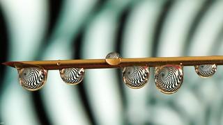 Spiral Stripes - macro