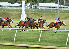 "2017-06-30 (56) r9 1st time by the grandstand on the outer turf course (JLeeFleenor) Tags: jockey جُوكِي jinete dżokej jocheu คนขี่ม้าแข่ง jóquei žokej kilparatsastaja rennreiter fantino 기수"" жокей jokey người horses thoroughbreds equestrian cheval cavalo cavallo cavall caballo pferd paard perd hevonen hest hestur cal kon konj beygir capall ceffyl cuddy yarraman faras alogo soos kuda uma pfeerd koin حصان кон 马 häst άλογο סוס घोड़ा 馬 koń лошадь photos photography md maryland marylandhorseracing marylandracing outside outdoors"