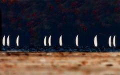 Sailing Regatta (coollessons2004) Tags: ship boat lake water fall autumn season regatta sail sailing