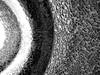 Shards (TejaO) Tags: glass round circles bw blackandwhite broken shards