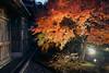 夜楓 (aelx911) Tags: a7rii a7r2 sony gmaster fe2470mmf28gm fe2470 fe2470gm landscape maple autumn fall light cityscape japan kyushu fukuoka dazaifu tenmangu 日本 九州 太宰府 天滿宮 福岡