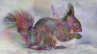 Bildschichten Eichhoernchen 35