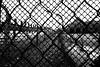 Never again. In memory of the Victims of the Holocaust. 73rd Anniversary of Liberation of Auschwitz-Birkenau. (Katarzyna Aleksandra) Tags: holocaust 73 anniversary fence black white inmemoryof victims auschwitz birkenau