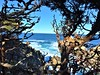 Point Lobos State Natural Reserve (PenangCA) Tags: california carmel pointlobos ocean tidepool rocks tree nature outdoor landscape beauty winterincalifornia