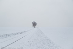 nothing but white (Christian Birzer) Tags: wiese schnee baum eis draussen schwarz himmel weg spur nebel grau pfad weis winter flora ice pflanzenwelt vegetation black floral fog gray grey icy meadow mist outdoor path road sky snow track tree white