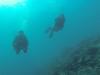 Buddy´s (Peter_069) Tags: tauchen diving scuba malediven maldives äqypten egypt wasser water underwater unterwasser padi fische fisch fish shellfish muscheln moräne moränen moraine batfish fledermausfisch koralle korallen coral nemo clownfisch clownfish boot boat vessel blaueswasser bluewater