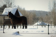 Pause (granule19) Tags: cheval horse hiver winter