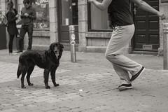 Dancer and Her Dog (Hattifnattar) Tags: dog girl dancing street ireland galway pentax dancer fa77mm limited bw monochrome
