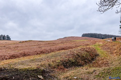 Bradgate Country Park 18th February 2018 (boddle (Steve Hart)) Tags: bradgate country park 18th february 2018 steve hart boddle steven bruce wyke road wyken coventry united kingdon england great britain canon 5d mk4 6d newtownlinford unitedkingdom gb 100400mm is usm ii 2470mm standard wild wilds wildlife life nature natural bird birds flowers flower fungii fungus insect insects spiders butterfly moth butterflies moths creepy crawley winter spring summer autumn seasons sunset weather sun sky cloud clouds panoramic landscape