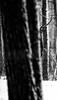 PIO_1397m-01 (MILESI FEDERICO) Tags: milesi milesifederico montagna montagne italia italy iamnikon inmontagna inverno ice nikon nikond7100 nital natura nature nat nevicata snow neige piemonte piedmont visitpiedmont valsusa valdisusa valliolimpiche valledisusa alpi alpicozie altavallesusa altavaldisusa febbraio 2018 d7100 dettagli details explorer wild wildlife mammifero bianconero bw biancoenero blackandwhite blackwhite monocromatico cervo