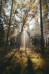 000116400013 (MatveyKarmakov) Tags: nikon nikonf3 kodak 35mmfilm morning film analog filmisnotdead filmphotography filmphoto filmcamera filmlandscape filmcommunity onfilm ishootfilm wood forest folk livefolk
