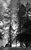 Sun Rays (PJ Swan) Tags: mist trees scotland woods perthshire dunkeld sun rays atmospheric winter afternoon