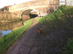 By the Bridge (poplars246penny) Tags: canal sunshine shadows tauntontobridgewatercanal somerset england greatbritian