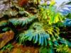 CRECES SOBRE LA ÍGNEA LAVA DORMIDA. (FOTOS PARA PASAR EL RATO) Tags: hojas green méxico cdmx jardin verde plantas lava