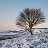 Pitstone Hill (Damian_Ward) Tags: damianward ©damianward landscape chilternhills chilterns thechilterns buckinghamshire bucks pitstone pitstonehill tree morning ivinghoe ivinghoebeacon sunrise snow winter