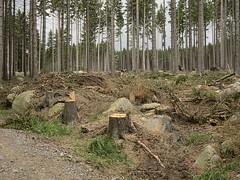 Schierke_e-m10_1019021888 (Torben*) Tags: olympusm17mmf18 olympusomdem10 rawtherapee harz schierke wald forest