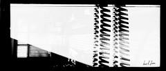H102.22 (louis.r.zurn) Tags: hasselblad 500cm ilford blackandwhite photography filmphotography 120film 60mm distagon zeiss ilfordhp5 hp5 blackandwhitefilm