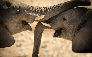 The touch of a trunk