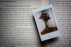 (Masako Metz) Tags: instant camera fijifilm instax mini 50s fun activity flower book vase one photo