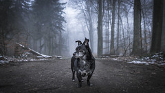Queen of the Forrest (Duke.Box) Tags: hund hundeportrait wald nebel low saturation nikon nikond810 nikon20mmf18