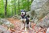 Trail in Acadia (rohithpalagiri) Tags: husky fall acadia