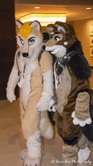 _DSC7591 (Acrufox) Tags: midwest furfest 2017 furry convention december hyatt regency ohare rosemont chicago illinois acrufox fursuit fursuiting mff2017