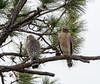 01-22-18-0000360 (Lake Worth) Tags: animal animals bird birds birdwatcher everglades southflorida feathers florida nature outdoor outdoors waterbirds wetlands wildlife wings