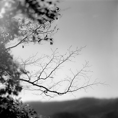 leafless in the sun (my analog journey) Tags: 500cm fujineopanacros100 mediumformat movformatcom hc110 dilutionb planar filmisawesome bnw filmdev:recipe=11735 kodakhc110 film:brand=fuji film:name=fujineopanacros100 film:iso=100 developer:brand=kodak developer:name=kodakhc110