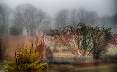 PAYSAGE BRUMEUX. (Crilion43) Tags: arbres région feuillesfeuillage sarthe ciel paysages moulinslecarbonnel nuages villes