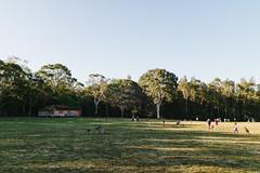 Morisset Kangaroos (Explore, Jan 18, 2018) (haoguoju) Tags: morisset lakemacquaire nsw australia canon canonm3 canoneosm3 efm1855mmf3556isstm stm efm 1855mm efm1855mmf3556 mirrorless centralcoast newcastle sydney newsouthwales morissetkangaroopark kangaroo acaciaave morissethospital