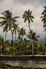 Kauwalomālie (wyojones) Tags: hawaii hawaiian puuhonuaohōnaunaunationalhistoricalpark hōnaunau kauwalomālie bigisland keoneelecove royalgrounds chieflyresidence ʻōhiʻa palmtree water cove basalt lavaflows boulders wall