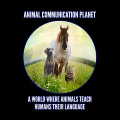 Pet Psychic, Animal Communication - Karen Anderson (An Introduction to Animal Communication) Tags: animalcommunication petpsychic animalpsychic spiritanimal spiritanimals karenanderson petloss deceasedpets grief paranormal psychic animalcommunicationclasses animalcommunicationcourses learnanimalcommunication howtocommunicatewithanimals animalcommunicationtips telepathicanimalcommunication
