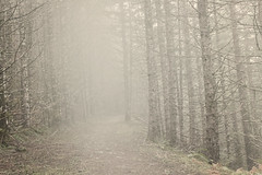 (rowjimmy76) Tags: oregon pacificnorthwest pnw hiking muted moody mist fog weather winter trees tillamookstateforest nature outdoors canon sl1 1855mm flat monotone