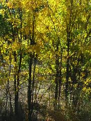 6130 (jHc__johart) Tags: foliage fallcolor oklahoma
