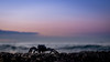 Just a crab watching a Hawaiian sunrise... (802701) Tags: 2018 201801 america hi hi2018 hawaii honolulu january2018 oahu usa unitedstates unitedstatesofamerica waikiki travel crab sunrise hawaiiansunrise