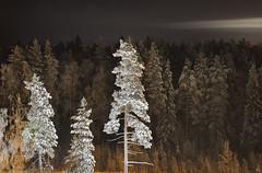 ...nattvy / ...night view (srchedlund) Tags: srchedlund nattvy nightview tree forest norrbotten luleå kronan sweden night winter trees blacknight