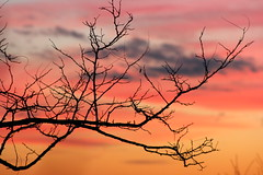 Winter sunset (viviandemotte) Tags: love nature canon photography macro landscape enjoythemoment relaxing dreaming wonderful tree clouds sky colorful christmas sunset winter