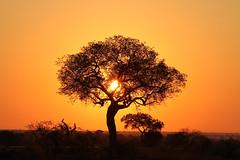 Satara - South Africa (Nick Dean1) Tags: ngc krugernationalpark southafrica sun sunrise