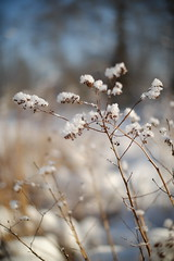 X-T1 2018-02-21 053 (linebrell) Tags: smc takumar 50mm bokeh outdoor sunlight winter lens turbo ii