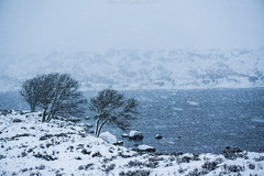 Blizzard (Blair McHattie Photography) Tags: snow storm blizzard trees water windy loch ossian scotland highlands