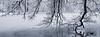 Winterwonderland II (macrobernd) Tags: nymphenburgschlosspark baum tree winter schnee snow monochrome monochrom schwarzweis sw blackwhite bw see lake frozen eis ice kalt cold blue blässhuhn gfx fuji gfx50s twig ast nature natur