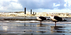 IMG_2168 (elisa_norderney) Tags: norderney möwe nordsee meer strand wasser